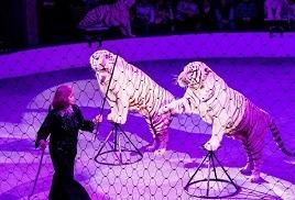 В Чувашии вор, обокравший цирк, попался на детекторе лжи